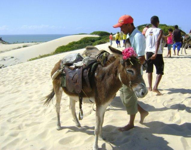 758-5o-dia-passeio-de-buggy-pelas-dunas-de-genipabu-vista-da-lagoa-de-genipabu-jegues