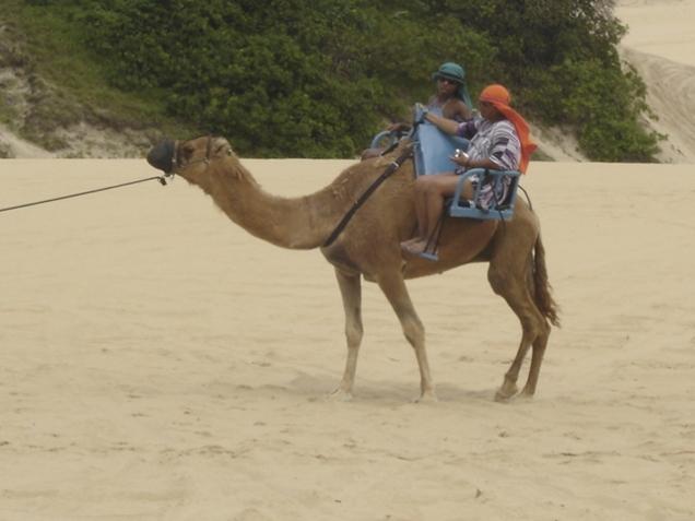 762-5o-dia-passeio-de-buggy-pelas-dunas-de-genipabu-dromedarios