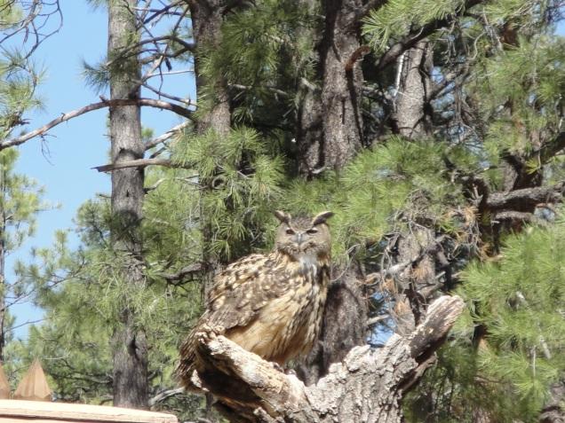 1973 8 dia Arizona Bearizona Birds of Prey